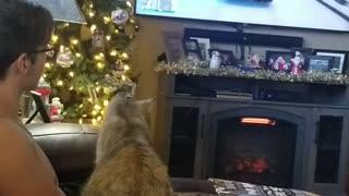 Cat loves watching GTA