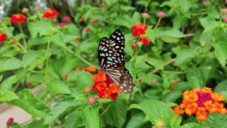 Butterfly on a Flower | Beautiful Nature