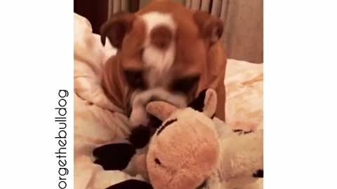 Bulldog puppy farts!!