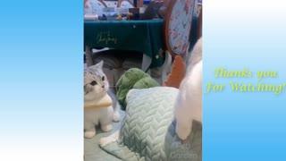 Cute Pets having strange reaction- so Funny