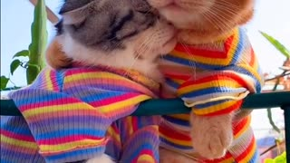 Cute and funny cats instant laugh