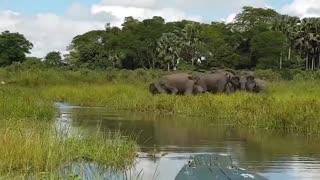 Crocodile is King Swamp! Crocodile vs Leopard Elephant Protect Baby From Crocodile Hunting