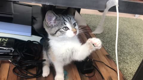 The cat was playing under the table, very funny