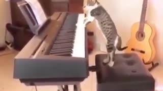 Cat Plays PIANO