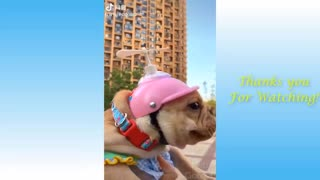 Funny Animals and Pets Video
