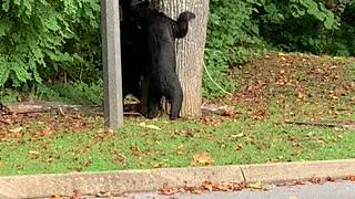 Bear-ing Around This Morning!