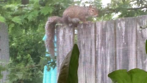 "Greeting my ""Window Squirrel"""