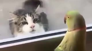 Cat paly with a parrot