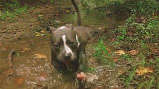 dog bathing!