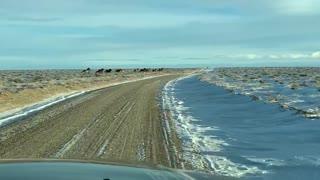 Wyoming's Wild Horses