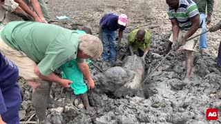 Baby elephants rescued from mud.