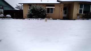 Puppy Runnng In The Snow