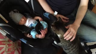 Cats Meeting Babies 4 first time