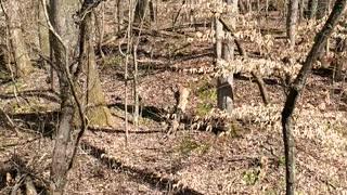 Just walking through spring trees