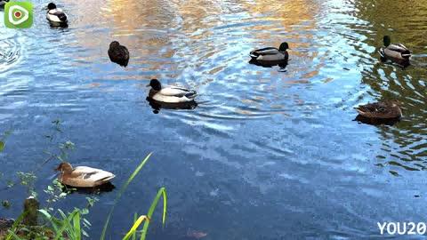 Duck pond in 2021   pet birds, beautiful birds,
