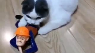 Soldier cat