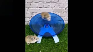 Cute And Funny Pets | Try Not To Laugh To These Pets Compilation #11💗 Cutest Lands