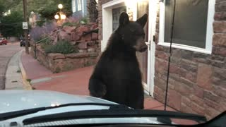 Manitou Springs Bear Comes Up Close