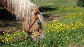 beatiful Horse