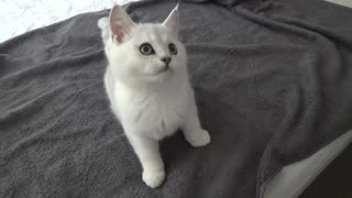 Adorable little kitten loves playing with owner