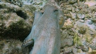 Octopus Exhibits Crazy Color Change