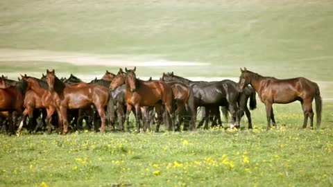 a large group of wild horses