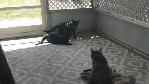 Kitties 7