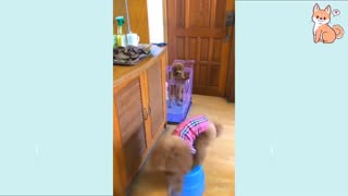 Cute and funny baby dogs video compilation