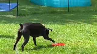 Doggy Obsessed With Water Fountain Toy