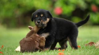 puppies friendship 1
