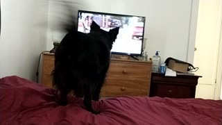Dog can't handle other dogs on tv