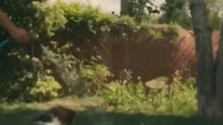 Dog splashes around with water hose