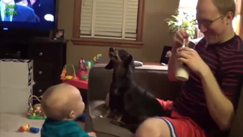 Funny Babies Laughing Hysterically at Dogs Compilation l