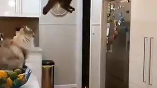Jump Pro Cat Slow motion Skill Pro