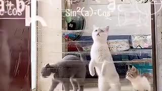 dumb Cat vs Smart Cat