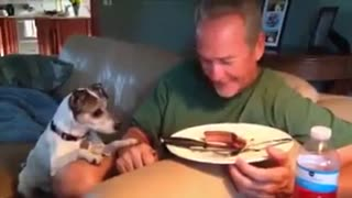 funny puppies with their owners