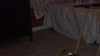 Spirit orbs of my dead dog