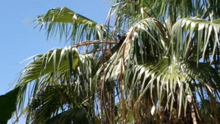 Peaceful Palm