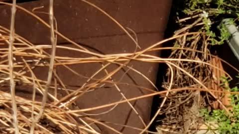 Bluebird & House Wren wrestle over Nest Box