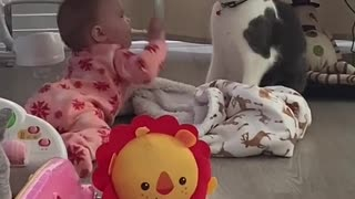 Cat and baby video