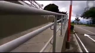 Video registró singular paseo de dos pavos en el Aeropuerto de Bucaramanga