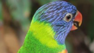 Parrot trying to talk