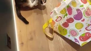 CRAZY CAT !!!