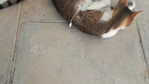 My pretty cat took earphone today
