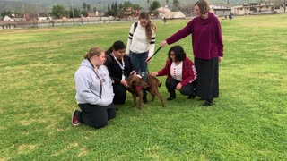 Service Dogs - Giving back to our local school district