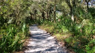 Morning walk in Florida