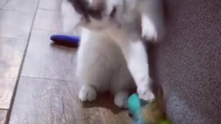 Cat loves her Toy