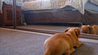 dog funny video , dog video