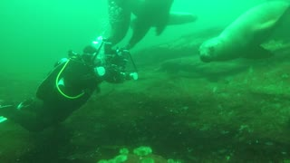 Diving with Stellar Sea-Lions