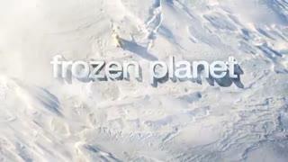 Frozen Planet: Least Weasel